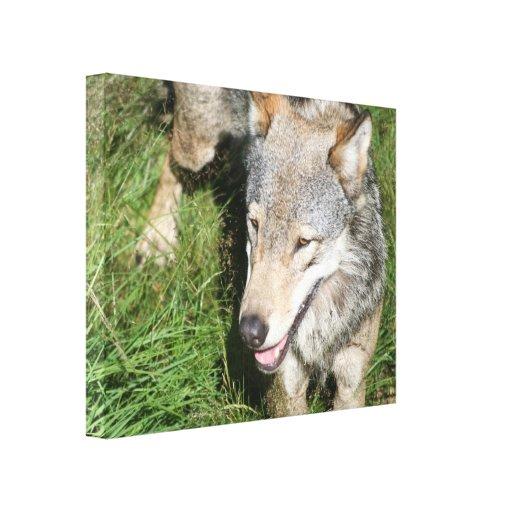 Impresión de la lona del vagabundeo del lobo impresión en lona estirada