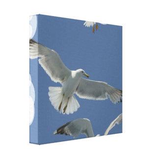 Impresión de la lona del vuelo de la gaviota lona envuelta para galerías