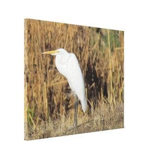 Impresión de la lona - Egret en hierba Impresiones De Lienzo