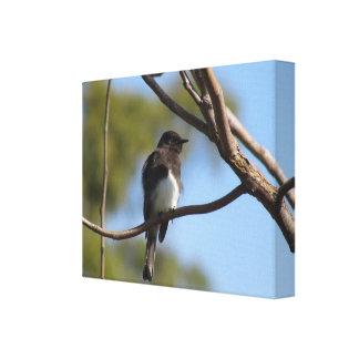 Impresión de la lona - Flycatcher en árbol Impresión En Lona Estirada