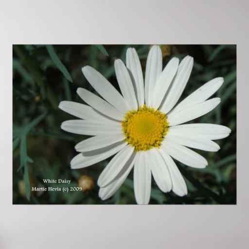 Impresión de la margarita blanca - seleccione su m impresiones