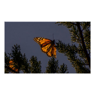 Impresión de la mariposa de monarca posters