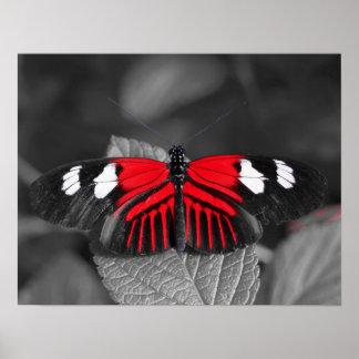 Impresión de la mariposa póster