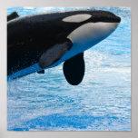 Impresión de la orca impresiones