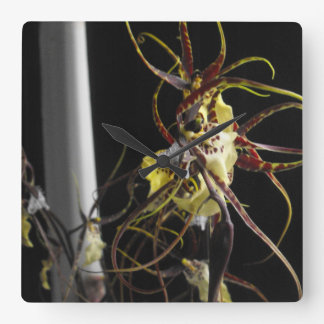 Impresión de la orquídea de araña de Oncidium por  Reloj Cuadrado