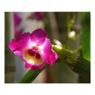 Impresión de la orquídea de las rosas fuertes arte fotográfico
