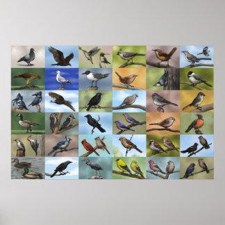 Impresión de la panoplia del pájaro póster