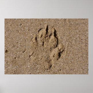 Impresión de la pata del perro en arena póster