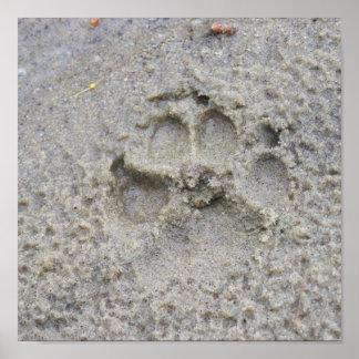 Impresión de la pata en la arena