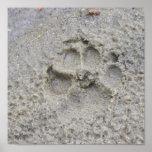 Impresión de la pata en la arena impresiones