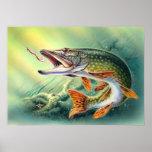 Impresión de la pesca de Pike Posters