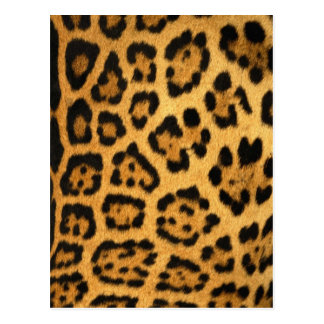 Impresión de la piel de Jaguar Postal