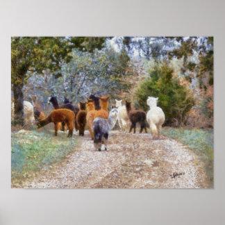Impresión de la pintura de Digitaces de las alpaca Posters