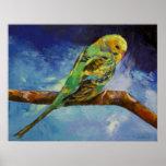 Impresión de la pintura del Parakeet Poster