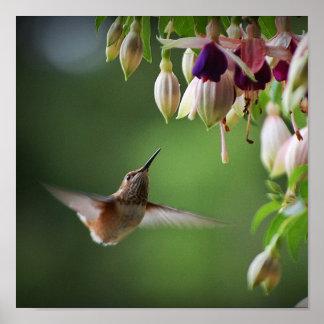 Impresión de la planta del colibrí y de la flor de impresiones