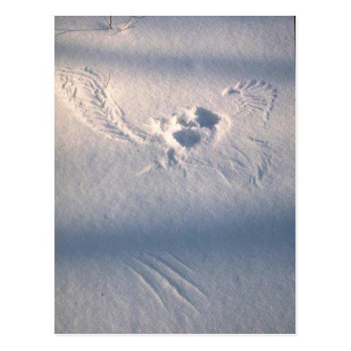 Impresión de la pluma del búho en la nieve tarjeta postal