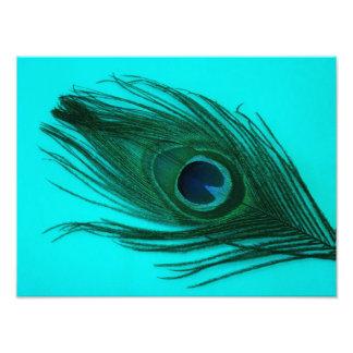 Impresión de la pluma del pavo real de la aguamari impresiones fotográficas