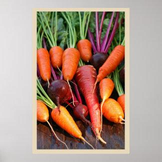 Impresión de la raíz de la zanahoria y de la remol impresiones