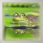 Impresión de la rana verde póster