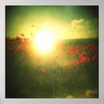 Impresión de la salida del sol de la amapola de Ho Poster