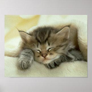 Impresión de la siesta del gato póster
