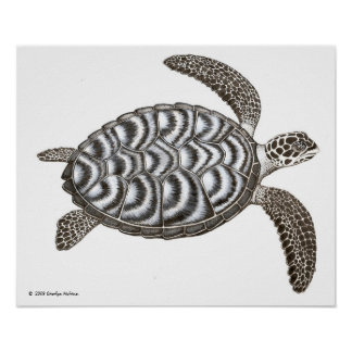 Impresión de la tortuga de mar de Hawksbill Poster