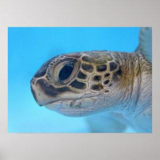 Impresión de la tortuga de mar verde póster