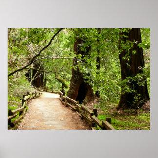 Impresión de la trayectoria II de maderas de Muir Poster