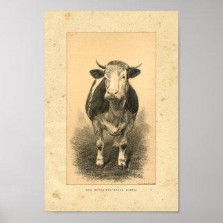 Impresión de la vaca del vintage 1888