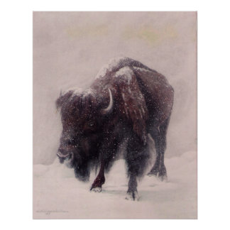 Impresión de la ventisca del búfalo impresiones