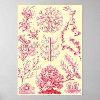 Impresión de la vida del océano de Haeckels de las Poster