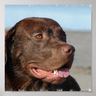 Impresión de Labrador del chocolate Impresiones