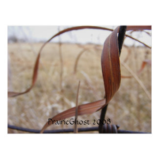 Impresión de las hierbas de pradera póster