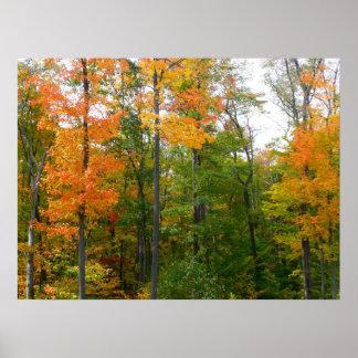 Impresión de las hojas de arce de la caída poster