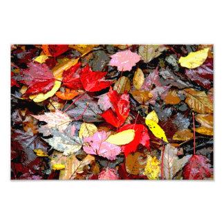 Impresión de las hojas de otoño fotografías