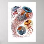 Impresión de las medusas de Haeckel Posters