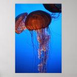 Impresión de las medusas I Poster