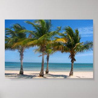 Impresión de las palmeras de la Florida