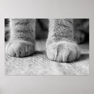 Impresión de las patas del gato póster
