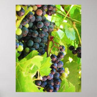Impresión de las uvas póster