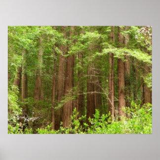 Impresión de los árboles de la secoya impresiones