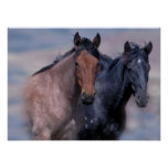 Impresión de los caballos salvajes poster