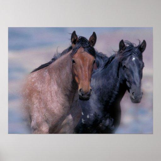 Impresión de los caballos salvajes póster