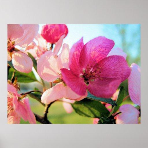 Impresión de los flores de la primavera póster