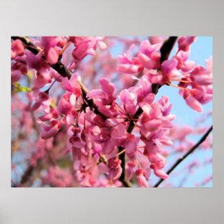 Impresión de los flores de Redbud Posters