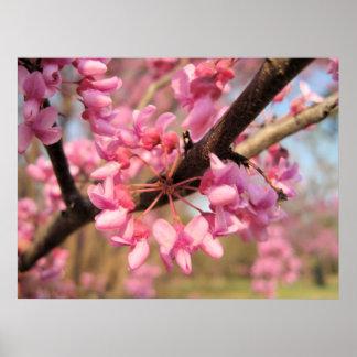 Impresión de los flores II de Oklahoma Redbud Impresiones