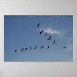 Impresión de los gansos en vuelo póster