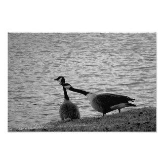 Impresión de los pájaros B&W del amor pequeña Fotos