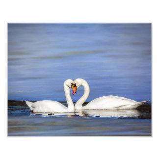 Impresión de los pares del cisne del amor del cojinete