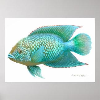 Impresión de los pescados de Cichlid de Jack Póster